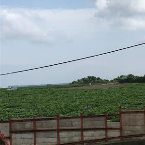 湘南の畑に行って来ました!