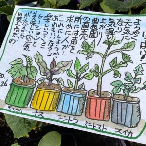 『野菜の苗いっぱい‼️』