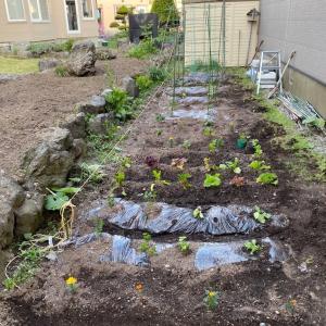 『いっぱい植えたミニミニ家庭菜園‼️』