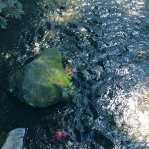 木漏れ日が美しい落合川
