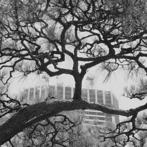 旧芝離宮恩賜庭園の撮影会、モノクロ写真