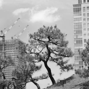 旧芝離宮恩賜庭園の撮影会