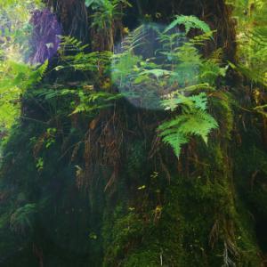 フォトサークル「森羅の会」の閉会