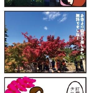 天龍寺、紅葉がきれい