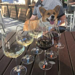 ワンコと一緒にワインバーでブランチ♪