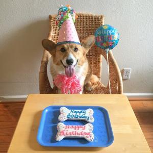 HAPPY 3RD BIRTHDAY ♪ バスティ3歳になりました !