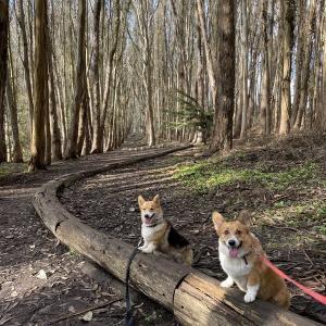 ワンコと一緒に幻想的なハイキングコースを散歩