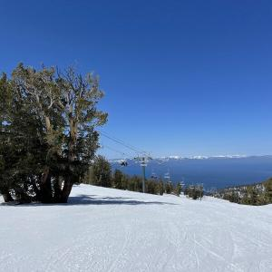 ワンコと一緒にレイクタホにて春スキー♪