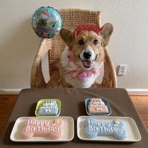 HAPPY 4TH BIRTHDAY ♪ バスティ4歳になりました !