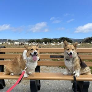 太平洋を眺めながらヤギとヒツジと出会える散歩コース