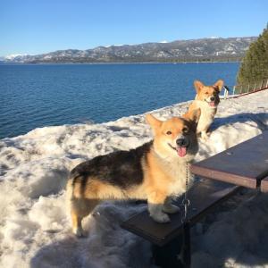 レイクタホでワンコと一緒に雪遊び
