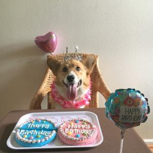 HAPPY 2ND BIRTHDAY ♪ バスティ2歳になりました !