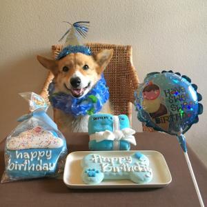 HAPPY 13TH BIRTHDAY ♪ クリンシ13歳になりました !