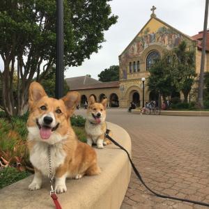 スタンフォード大学キャンパスで散歩♪
