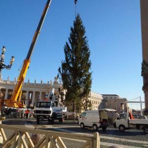バティカンのツリー搬入と新たな首相令の草案。