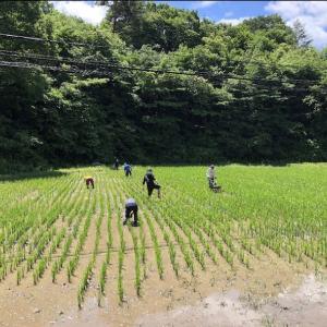 【募集】7/5 ひるてぃ農園で草取りしませんか?(鮫川村の地産地消食堂おしゃべりキッチンでランチ
