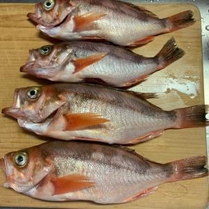 だんなの釣り料理第2弾! #魚料理 #新潟 #ポケモンGO #色違い #ポケ森 #かき氷