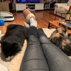 癒しの猫たち
