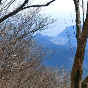 登り尾巨木を訪ねて