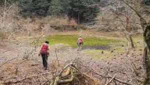 伊豆新聞 「天与の森 天城山のいま」 5月24日掲載記事