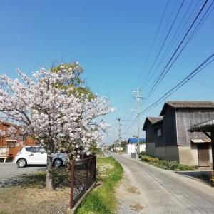 桜並木学生通り