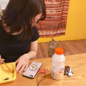 台湾で猫と暮らしてみた