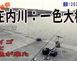 釣果:庄内川(一色大橋:2020年08月)