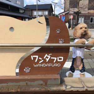 【犬の足湯!?】石川県輪島市にあるワンダフロ!!