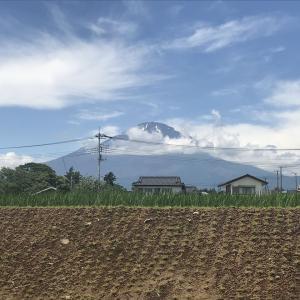 富士山、CoCo壱番、牛メンチカツ、ホウレンソウ、アサリ、シーザーサラダ、新作アイス、イカ、あんこが入った揚げ食パン、サクランボ、生け花