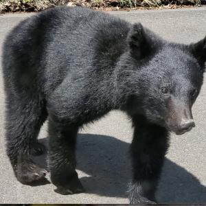 野生の子熊に出会いました。