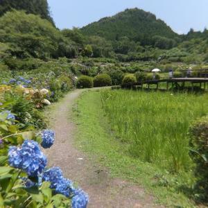 夏の花を求めて~滝谷花菖蒲園から馬見丘陵公園へ