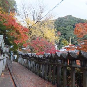 生駒山から信貴山へ~紅葉を求めて生駒縦走歩道ハイキング