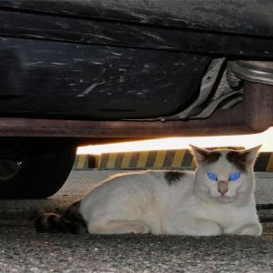 車の下になにか