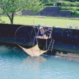 シラウオ漁