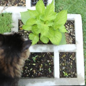 庭観察6/15 雨と湿気で芝生が元気