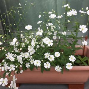お花の季節