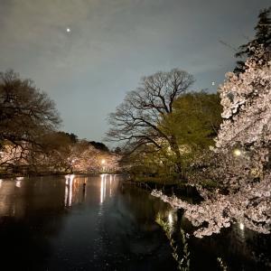 井の頭公園桜の記録(2020年)