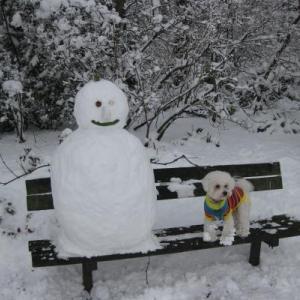 ウノ君お散歩☆雪の日