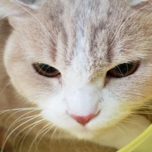 NYAON出身猫こたろうくんご来店☆