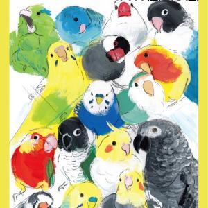 東急ハンズ梅田「インコと鳥の雑貨展」11/1から!