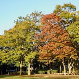 やっと秋らしい天候に