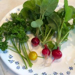朝取れ野菜