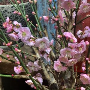 春よ来い…