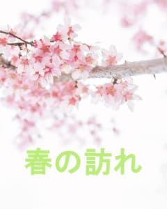 柏駅常磐線沿いの一本桜