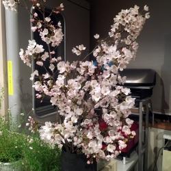 店で、そして自宅でお花見