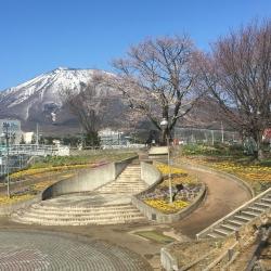 2021年駅前広場の大山桜
