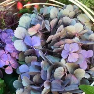 美しい花のコレクション