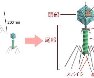 「ヒトがいまあるのはウイルスのおかげ!」武村政春 感想