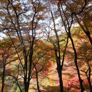 箕面・紅葉の雲隣の森へ