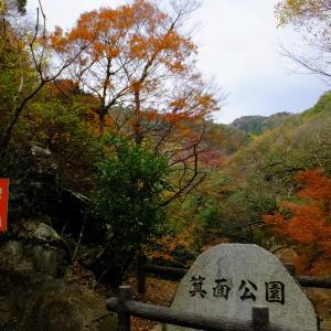 箕面大瀧の紅葉!